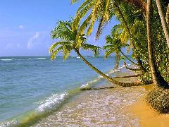 Click to downlowd the picture :: Beach and coconut trees