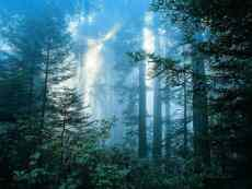 Click to downlowd the picture :: Forest and Mist