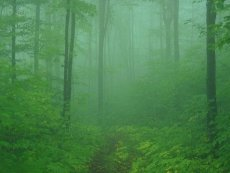 Click to downlowd the picture :: Forest and Mist Green