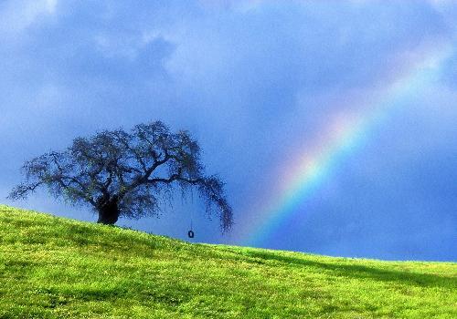 قوس القزح يغازل سطح المكتب/ Rainbow Flirts Desktop arcenciel-1327221000