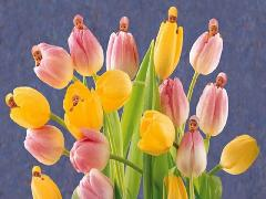 Click to downlowd the picture :: Babies in Tulips