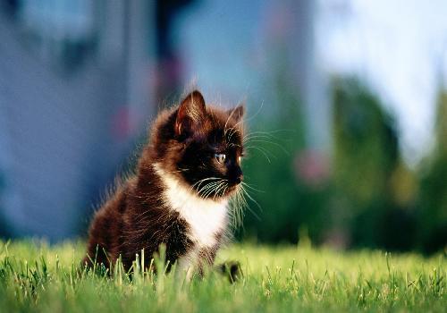 Fond d 39 cran chaton dans l 39 herbe chats et chatons for Haute herbe pokemon