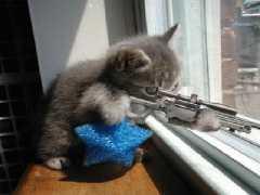 Stop à l'invasion des chats ! - Page 2 Dogs_sniper-t