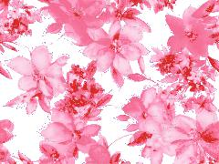 fonds d'écran fleurs et roses (fond d'écran)