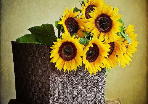 bouquet of sunflowers in a basket