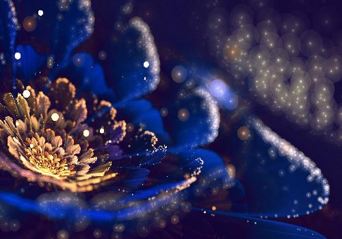 flowers with blue petals and reflections