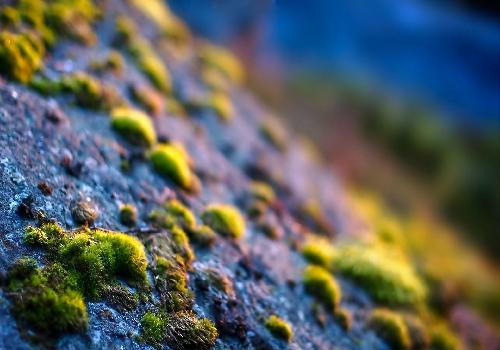 green moss on gray stone