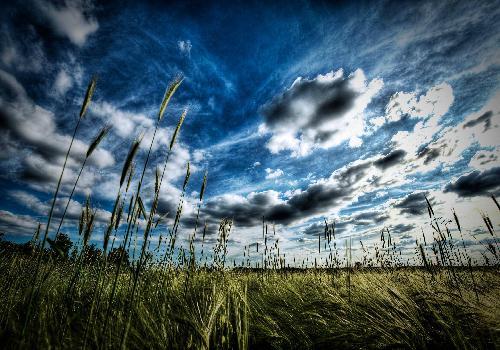 Fond d 39 cran vue d 39 un champ d 39 herbe seche sous le ciel for Haute herbe pokemon