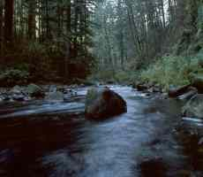 Click to downlowd the picture :: Little River in the forest