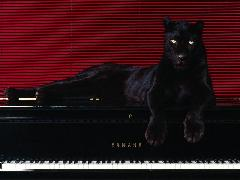 Click to downlowd the picture :: Black panther on piano