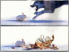 Click to downlowd the picture :: Wolf vs rabbit