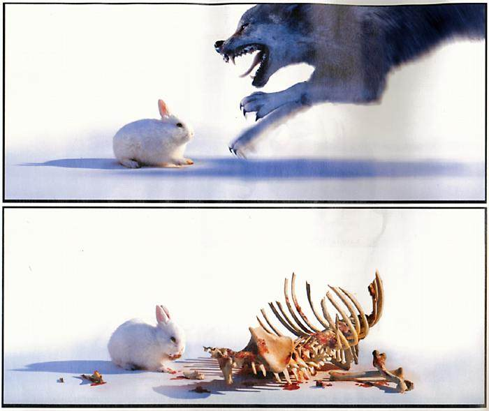 Wolf vs rabbit
