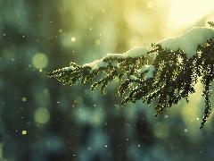 Snow and winter
