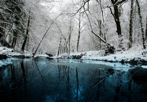 Forest and river under the snow