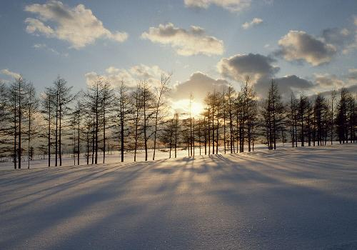 Sunst, snow and trees
