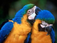http://www.1001-votes.com/vote/1234fonds/oiseaux-1150372792-t.jpg
