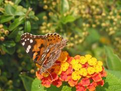 Cliquez pour télécharger l image paysages de printemps papillon