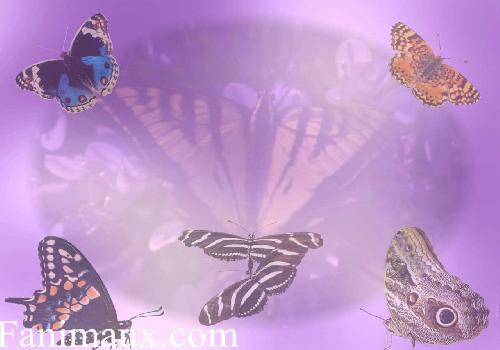 Fonds d 39 cran les papillons fond d 39 cran for Fond ecran papillon