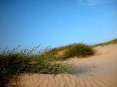 Click to downlowd the picture :: Summer Landscape, sand
