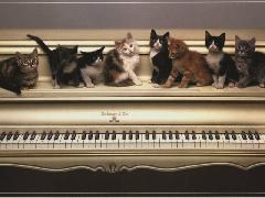 Click to downlowd the picture :: Piano and cats !