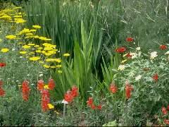 Écran sur les saisons et leurs paysages : paysages de printemps