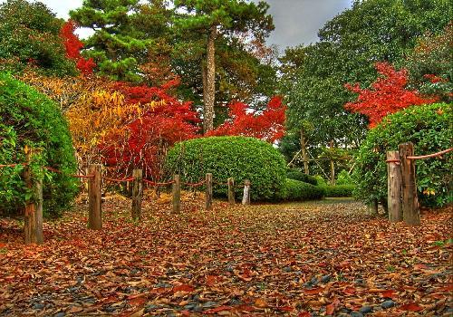 fond d 39 cran nature d 39 automne belles couleurs d 39 automnes saisons et paysages. Black Bedroom Furniture Sets. Home Design Ideas