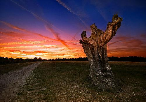tree trunk at sunset
