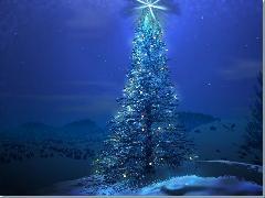 Christmass Trees